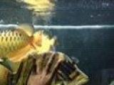 鱼缸升级,自家养鱼出售