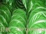 珠海凤凰北帆布厂家批发工业帆布工地篷布防水布防火布篷布