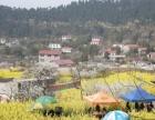 幸福山歌唱起来双东镇第十二届民俗文化赏花月即将开幕