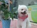 【阳光宠屋】 宠物美容、造型、寄养、售卖