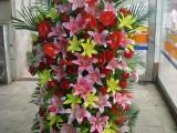 上海綠植花卉綠植租擺辦公室植物租賃開業喬遷鮮花花籃