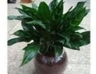 北京专业绿植租摆 花卉销售
