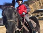 2017年苏州骑马冬令营,青少年马术冬令营