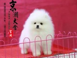 青岛最好的狗场是哪家