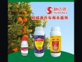 特效药治疗柑橘青苔 青苔净三天脱落的杀菌剂 青苔病见效快药