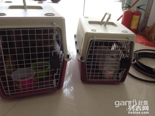 沈阳蓝海物流机场代理宠物托运,宠物和主人同飞机