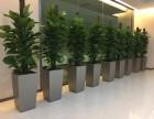 上海奉贤区专业绿植租摆花卉租摆园林绿化工程园林设计