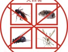 南京 专业杀蟑螂 灭老鼠 除害虫 当场见效 高效环保