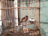 建平老张鸟笼鸟具
