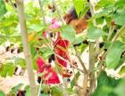 亲子乐园水果采摘园郊游自助烧烤周边游