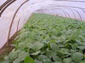 为您提供好的EVA大棚膜资讯-EVA农膜订购