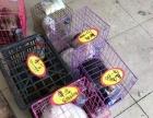 出售宠物猫狗低价
