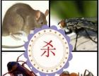 东森专业灭鼠灭蟑灭白蚁