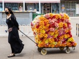 鮮花批發市場便宜鮮花