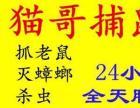 南京专业杀蟑螂、灭老鼠、除害虫、当场见效、高效环保