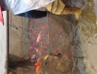 桂林鱼夫渔场(小金鱼,锦鲤)