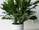 成都郫县室内绿植花卉租赁销售,植物墙,私家花园