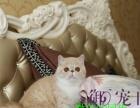 转让)纯种健康加菲猫 包子脸肉粉粉小鼻子水滴大眼加菲猫
