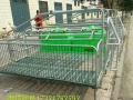批发猪床猪用母猪产床定位栏