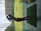 高尔夫球学习教练一对一培训 闵行 莘庄 虹桥 浦江及周边