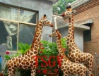 仿真长颈鹿模型林园庭院装饰摆件