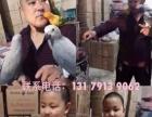 常年出售各种玩赏鸟