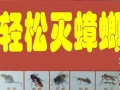 专业除虫除蚁I灭鼠|灭蟑|灭蚊蝇|杀虫