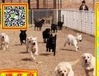 正规狗场繁殖纯种、拉拉犬、 赛级品质 、同城送货!