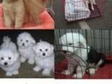 广东24小时宠物托运