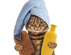 历下宠物培训机构,雷欧宠物是您正确的选择