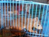 出售机灵活泼的魔王松鼠,很好养的
