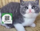 深圳哪里有宠物猫出售,深圳哪里有卖纯种蓝猫价格