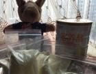 宠物羊奶粉狗狗羊奶粉临期羊奶粉散装100g每袋4袋包邮