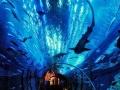 国庆小假期 去香港两天一晚海洋公园团购价仅288元