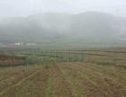 300多亩肥沃土地出租 种植 养殖等 公路方便