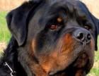深圳最大宠物养殖基地常年出售各种精品宠物幼犬