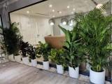 北京花卉租賃,綠植租賃公司,植物租賃