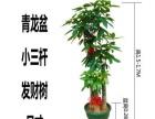 广州专业绿植租摆服务好单位租花绿植花卉租摆租