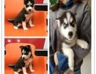宜春宠物狗的品种及图片