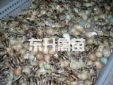 广西禽苗批发市场_买广西鸡苗当然是到东升禽苗孵化公司