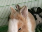 批发零售各种松鼠刺猬兔子飞鼠龙猫等各种小宠物