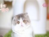 可爱萌宠加菲猫 专业十年繁殖想买养的活的猫咪点进来