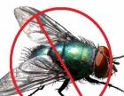 蚌埠灭鼠除虫公司 杀虫消杀专业灭蟑螂服务 虫控公司