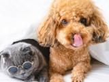 上海本眾寵物醫院 一 該判斷幼犬的性格
