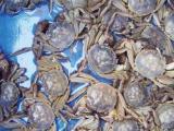 龙虾,螃蟹,批发,保运输