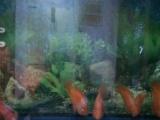 出1条红财神,9条鹦鹉鱼