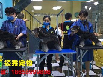 蚌埠淮上区宠物美容师专业培训多少钱领秀,宽进严出