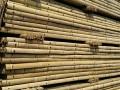 长期批发竹竿竹片,菜架竹,杉木杆园林绿化材料