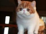 深圳哪里有最正规最大的宠物店,我想养只加菲猫