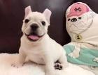 珠海哪里有狗狗卖珠海狗狗多少钱珠海哪里有狗狗领养